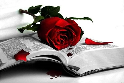 Rose on a book - love poems metaphor